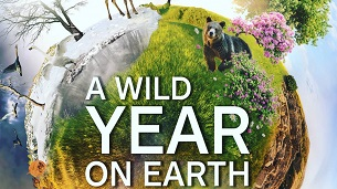 A Wild Year on Earth (2020)